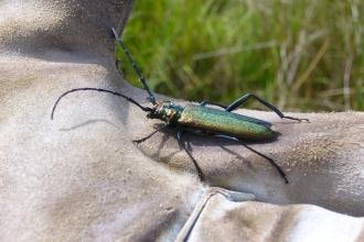 Beetles | Gloucestershire Wildlife Trust