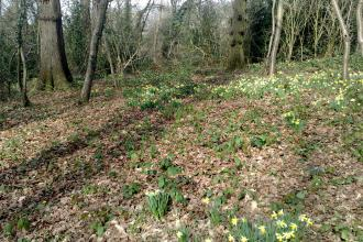 Betty Daw's Wood
