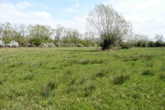Chaceley Meadow