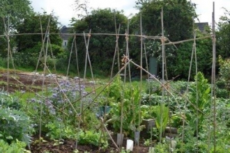 Sue Bradley allotment June 2019 (c) Sue Bradley