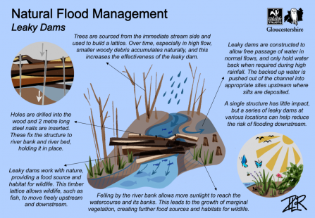 Leaky Dams - Natural Flood Management